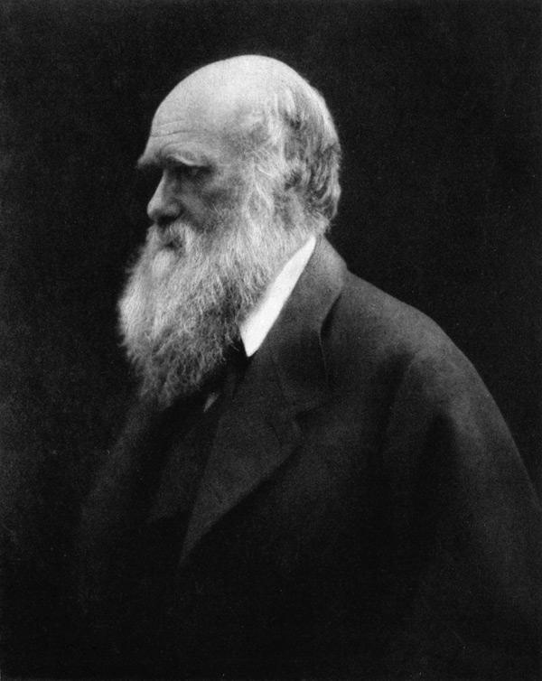 """Julia Margaret Cameron (England, 1815-1879): Charles Darwin, 1868, Albumen print, 11.25 x 9.5"""""""