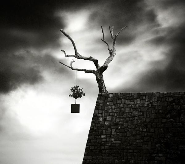 Tree by George Christakis