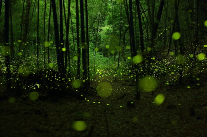 Fireflies by Fast Eddle