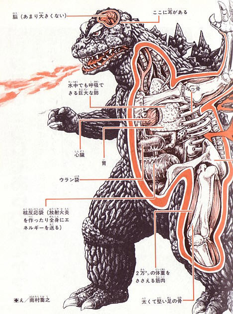 "Anatomy of Godzilla by unnamed artist - ""This anatomical sketch of Godzilla reveals a relatively small brain, giant lungs that allow  underwater breathing, leg muscles that can support 20,000 tons of body weight,  and a ""uranium sack"" and ""nuclear reaction sack"" that produce  radioactive fire-breath and energize the body."""