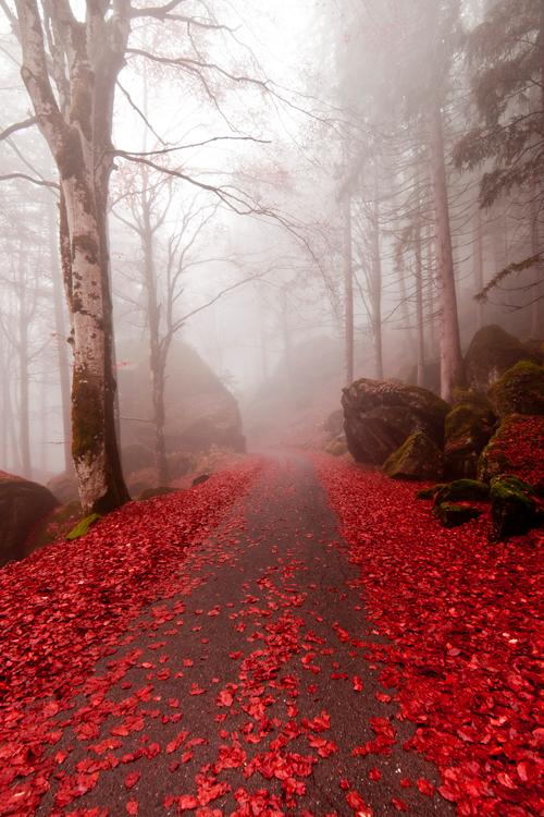 Leaves photo by Corrado Orio