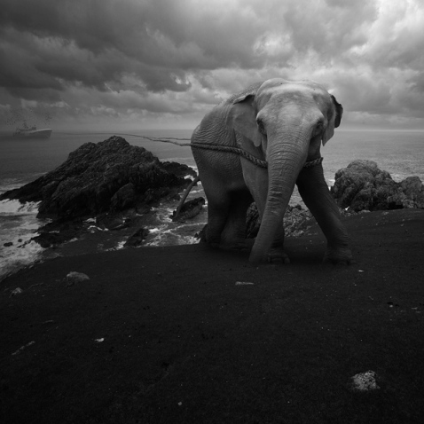elephant and ship wreck