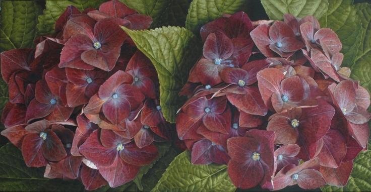 Hydrangea - Oil painting by Mia Tarney
