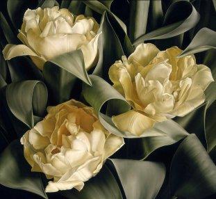 tulipa-verona-new-web