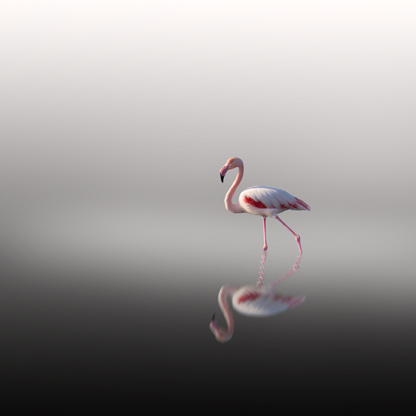 "From the series, ""Flamingo Dancing"", photography by Vassilis Tangoulis"