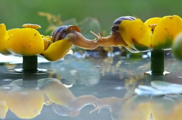 Snail Photography by Vyacheslav Mishchenko