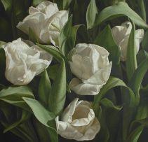 Silver Dollar Tulip