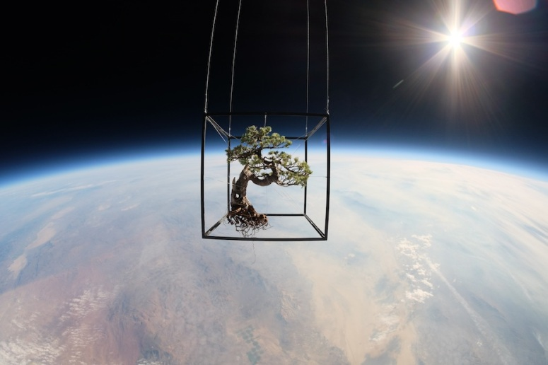 "Image from ""EXOBIOTANICA —BOTANICAL SPACE FLIGHT-"" team project including Azuma Makoto."