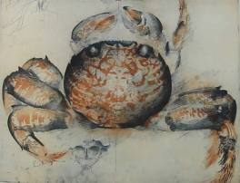 Cat 13.Large Crab, topside (1991)