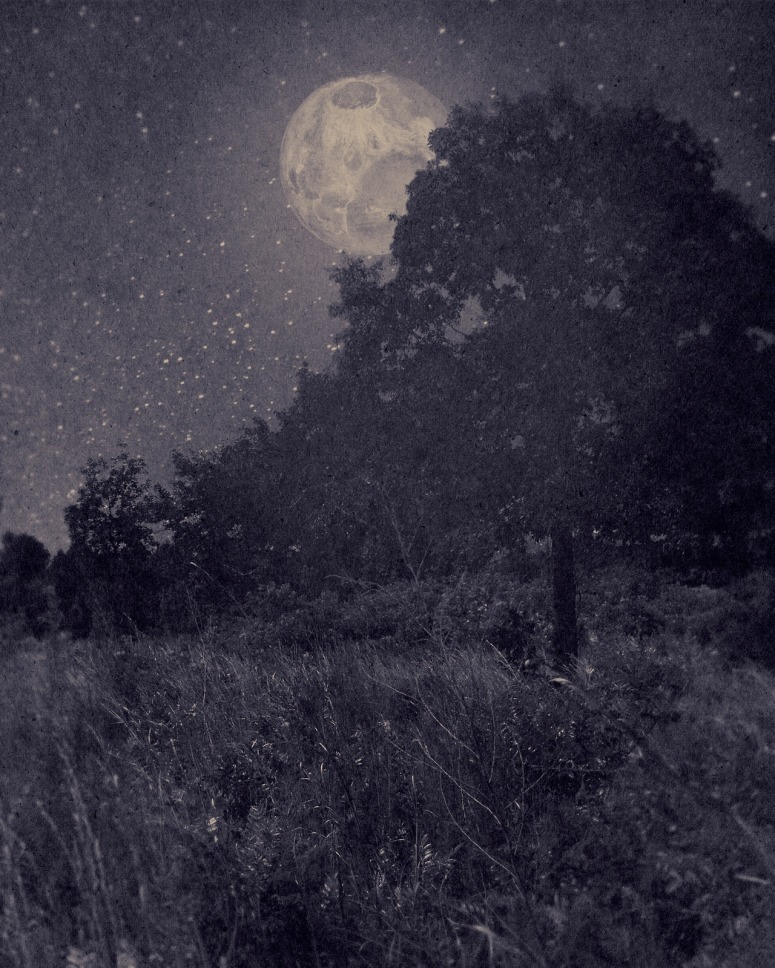 Nocturnal Landscape 113 - 2014 Digital Photograph printed on Hahnemühle Photo Rag Pearl