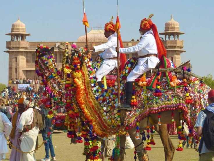 Camel in Costume 2