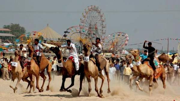 Bikaner Camel Festival Races