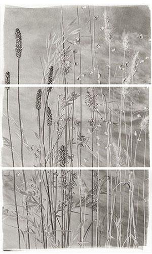 Valley Grasses VI  - platinum/palladium  by Brigitte Carnochan