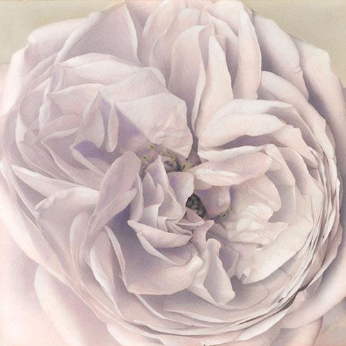Pale Rose - Hand Painted Gelatin Silver Print by Brigitte Carnochan