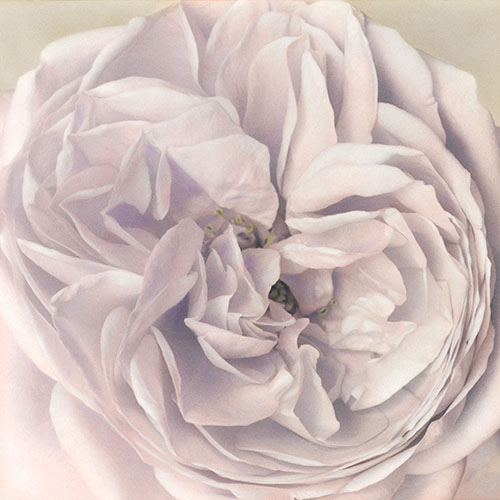 Pale Rose - Hand Painted Gelatin Silver Print by Brigitte Carnochan