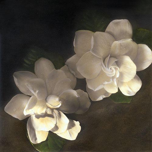 Two Gardenias - Painted Gelatin Silver Print by Brigitte Carnochan