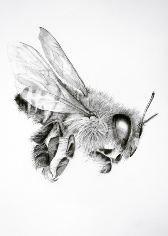 Bee 20 (The Real Work) by Rebecca Clark