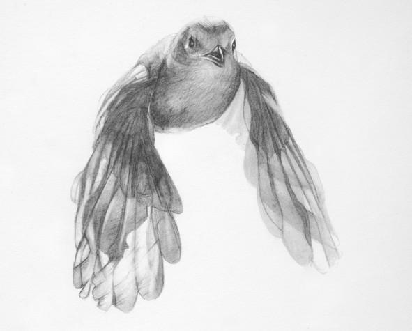 Bird 1 by Rebecca Clark