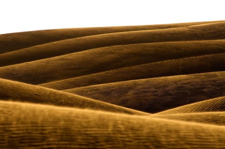 Golden Waves (Iran),  Photo by Meghdad  Shamsolvaezin