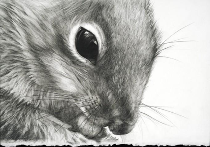 Nik's Squirrel by Rebecca Clark