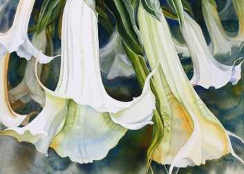 Angel's Trumpets