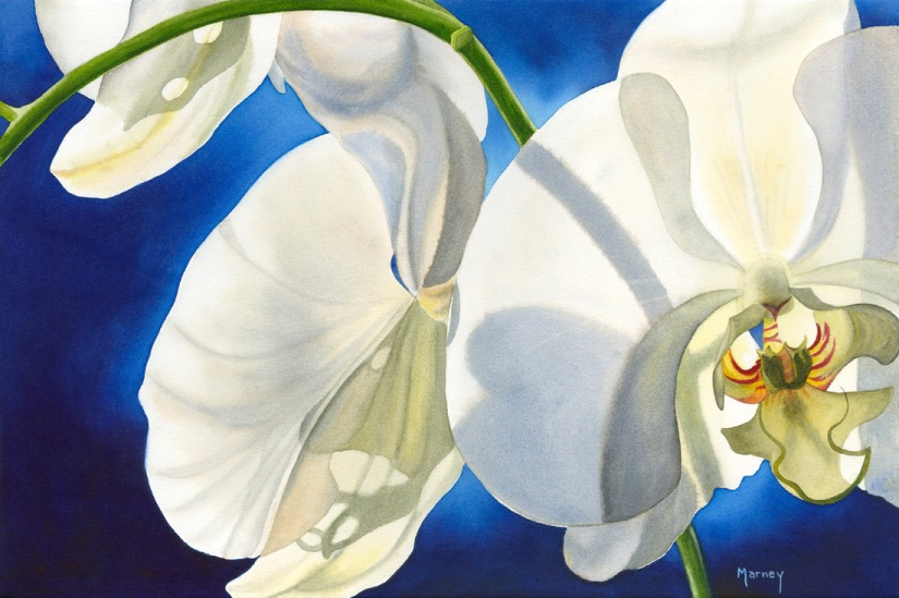 Orchid Glow by Marney Ward