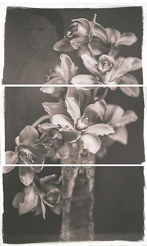 Picasso's Orchid