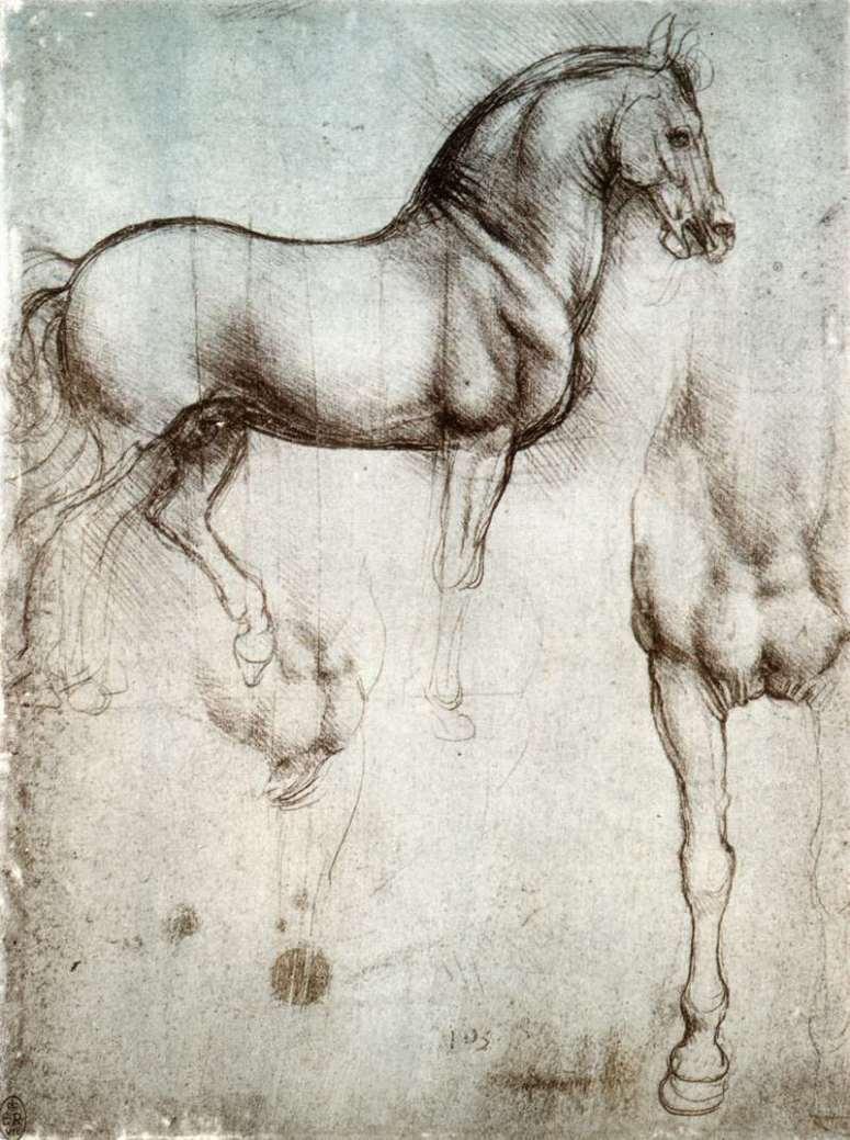 Study of Horses