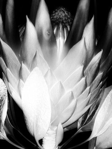Gelatin Silver Print by Amanda Means