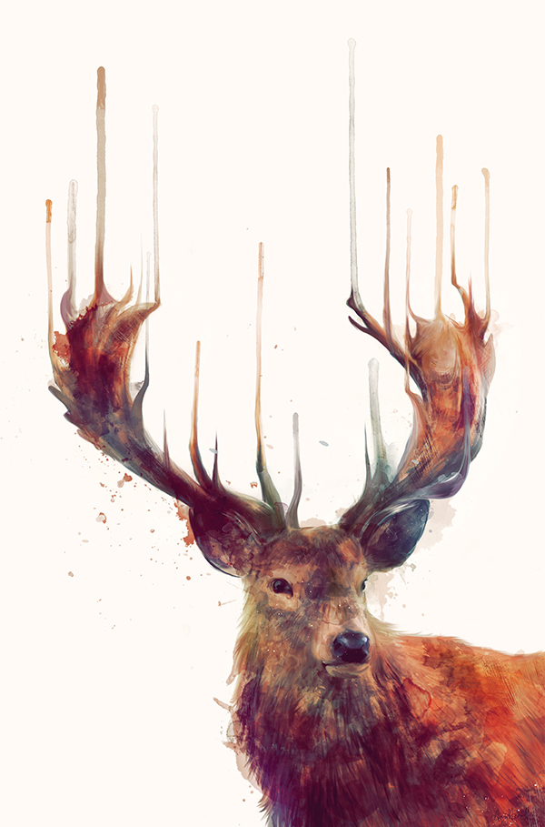Red Deer - Illustration by Amy Hamilton