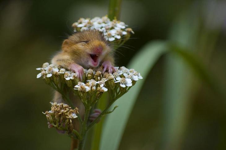 Hamster Loves Flowers photo by Andrea Zampatti