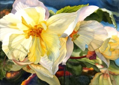 Butchart's Begonias - Watercolour by Marney Ward