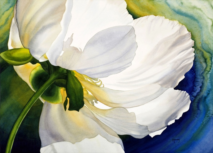 Pulse of  Peony - Watercolour by Marney Ward
