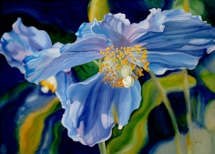 Two Blue Poppies