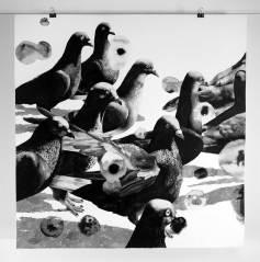1-duiwe